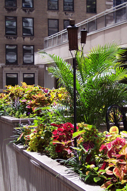 douglas-koch-exterior-gardening