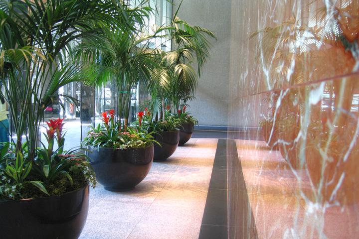 DK Interior Plantscape